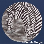 Zebras Drinking Water In The Cycle Of Life